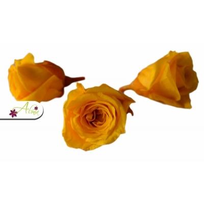 Stabilizovaný kvet ruže S