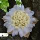 Svadobná kytica - stabilizované kvety