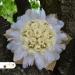 Zlatá svadobná kytica zo stabilizovaných ruží