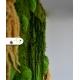 Živý obraz zo stabilizovaného machu