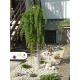 Realizácia záhrady - Larix