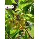 Realizácia záhrady - ovocie