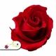 Stabilizované kvety - červená ruža