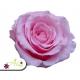 Stabilizované kvety - ružová ruža