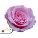 Stabilizovaná ruža - ružová