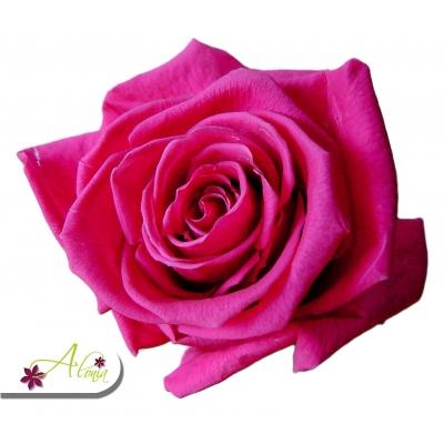Stabilizované kvety - tmavo ružová ruža