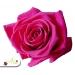 Stabilizovaná ruža - tmavo ružová