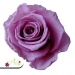 Stabilizovaná ruža - ružovo fialová