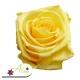 Stabilizované kvety - žltá ruža