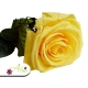 Žltá ruža, ktorá vydrží 730 dní