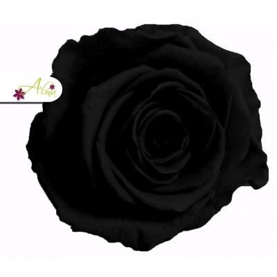 Stabilizované kvety - čierná ruža