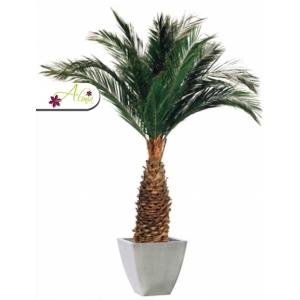Stabilizovaná rastlina Agave 230 cm