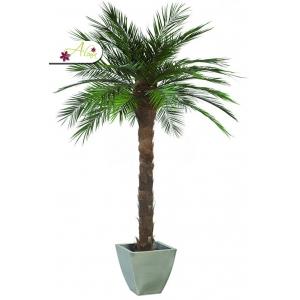 Stabilizovaná rastlina Phoenix 180 cm