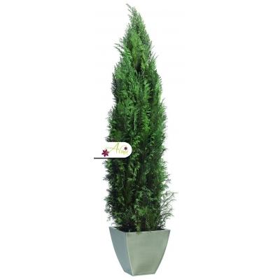 Stabilizovaná rastlina Phoenix 100 cm