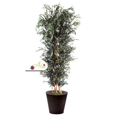 Stabilizovaná rastlina Parvifolia 130 cm