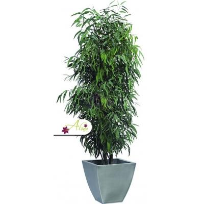 Stabilizovaná rastlina Pendula 130 cm