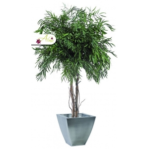 Stabilizovaná rastlina Nicoly 200 cm