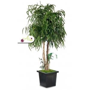Stabilizovaná rastlina Pendula 240 cm