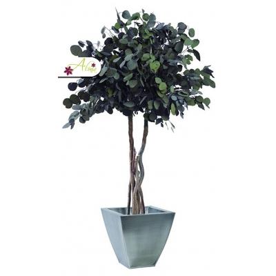 Stabilizovaná rastlina Populus 130 cm