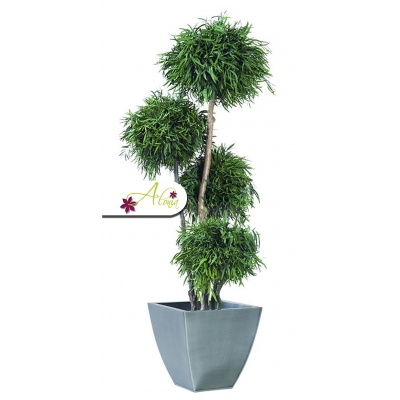 Stabilizovaná rastlina Nicoly 180 cm