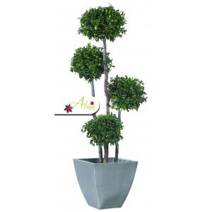 Stabilizovaná rastlina Pittosporum 180 cm