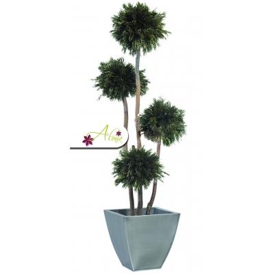Stabilizovaná rastlina Thuja 180 cm