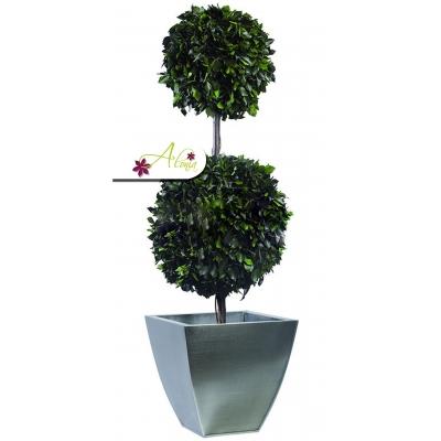 Stabilizovaná rastlina Hedera 140 cm