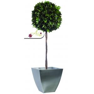 Stabilizovaná rastlina Hedera 100 cm