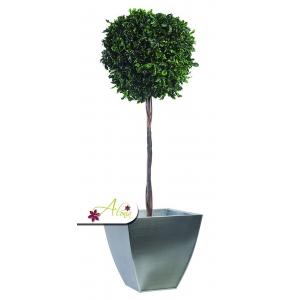 Stabilizovaná rastlina Pittosporum 140 cm