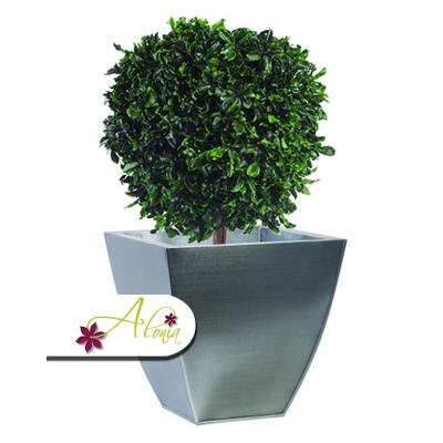 Stabilizovaná rastlina Pittosporum 40 cm