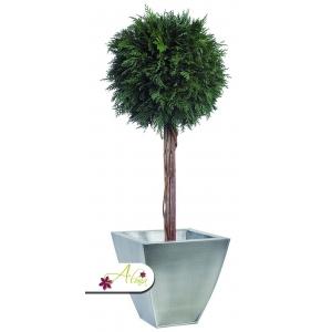 Stabilizovaná rastlina Thuja 140 cm