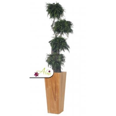Stabilizovaná rastlina Thuja 160 cm