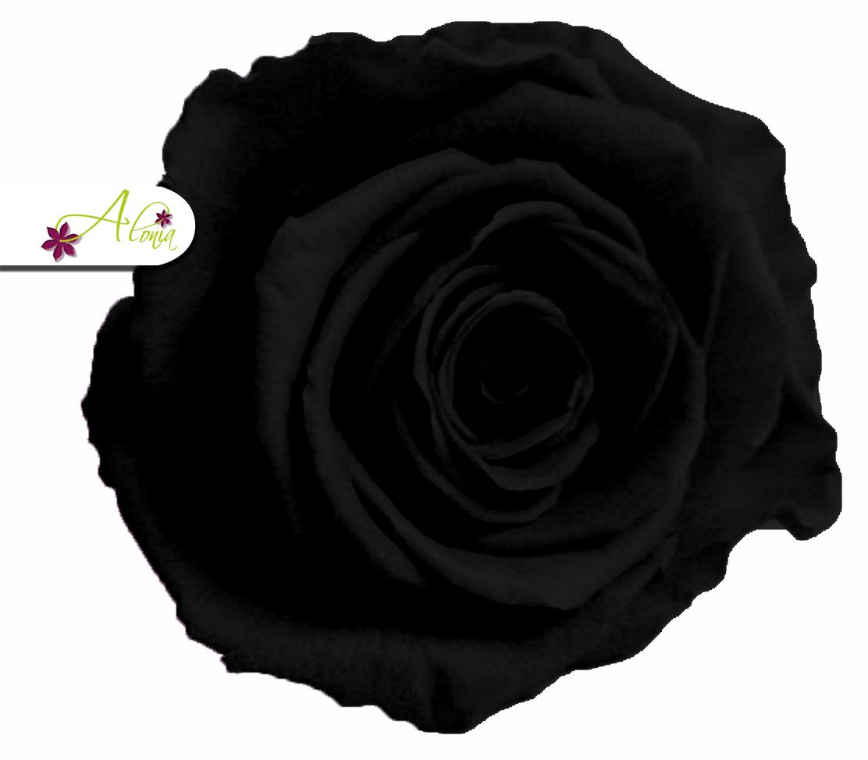 Stabilizované kvety - čierna ruža