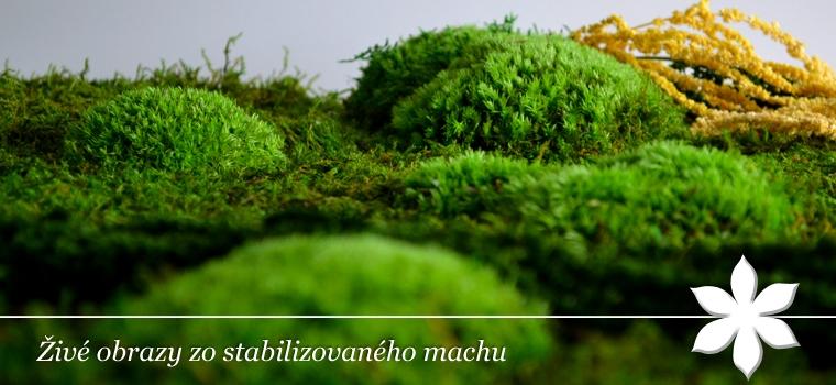 Živé obrazy zo stabilizovaného  machu